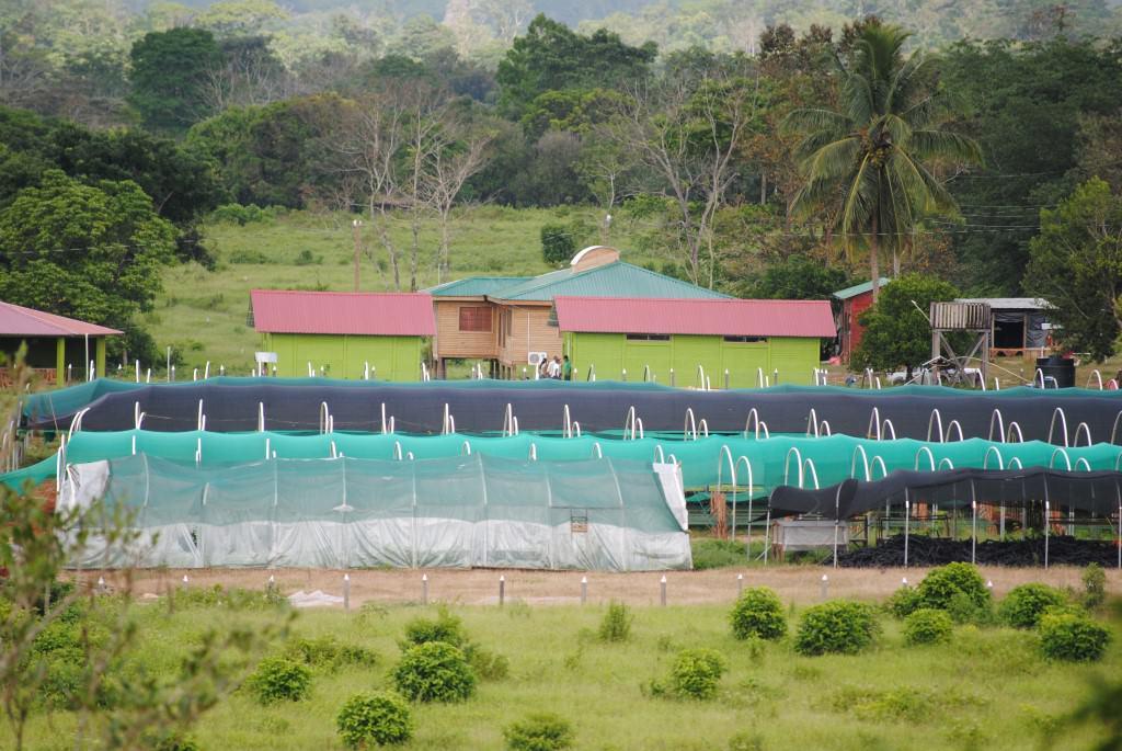 Nuevas instalaciones para viveros