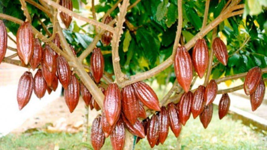 Cacao nica presente en el Salón du Chocolat en París