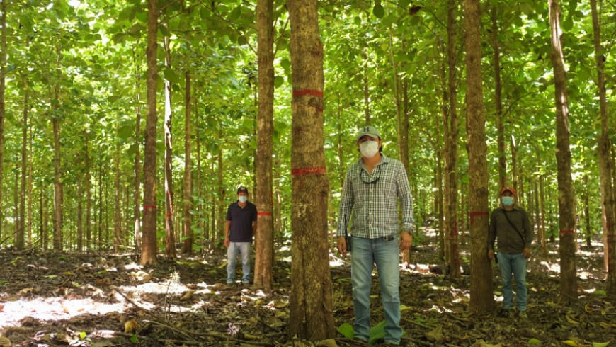 Los múltiples beneficios ambientales de las plantaciones forestales