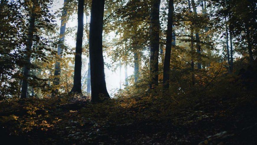 Proyecto de captura de carbono de MLR Forestal en fase de consulta pública