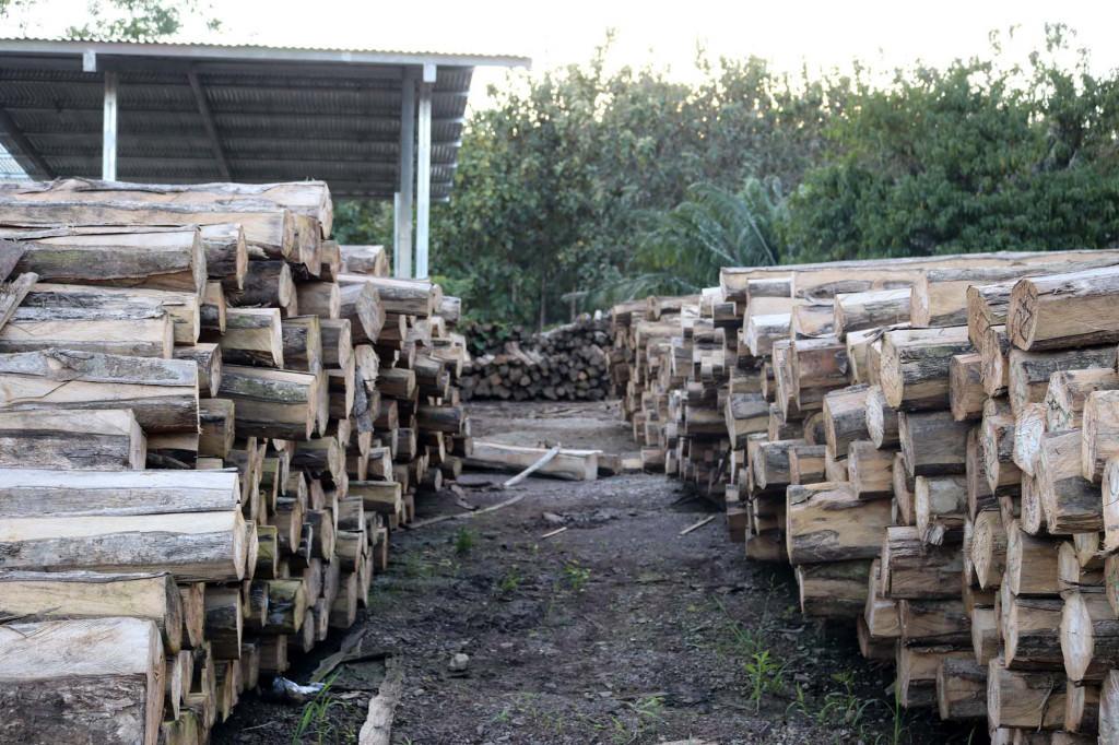 MLR Forestal realiza primera exportación de madera