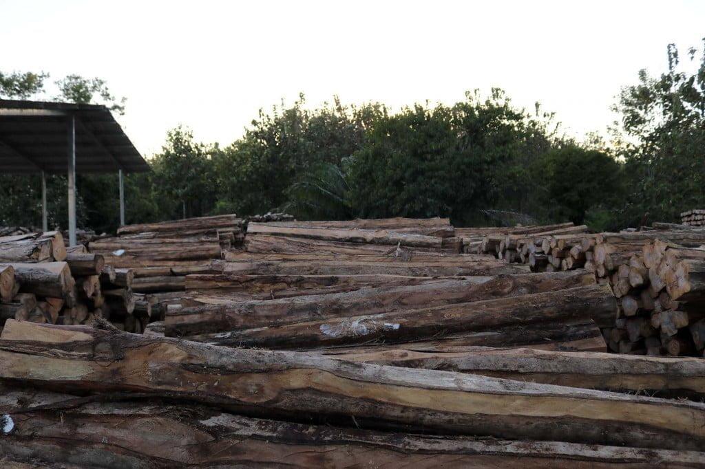 mlr forestal teca 3