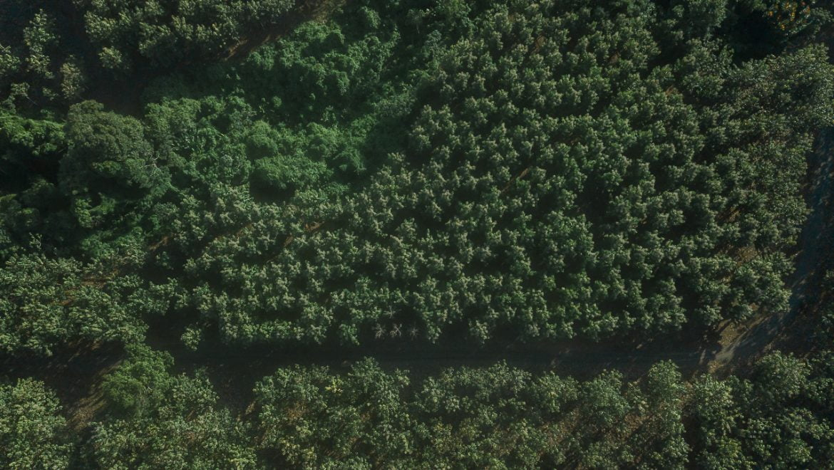 Forests and forest plantations, what´s the difference?