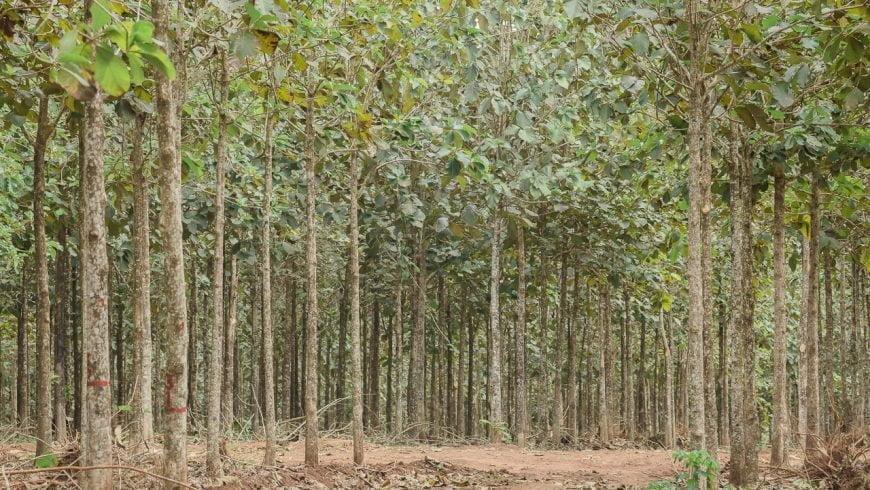 La forestación y su ayuda en la lucha contra el cambio climático
