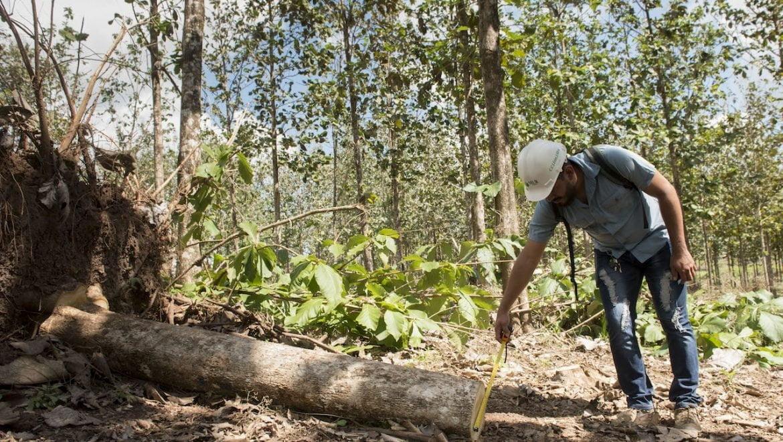Así aprovechará MLR Forestal los árboles derribados por Eta y Iota en sus predios