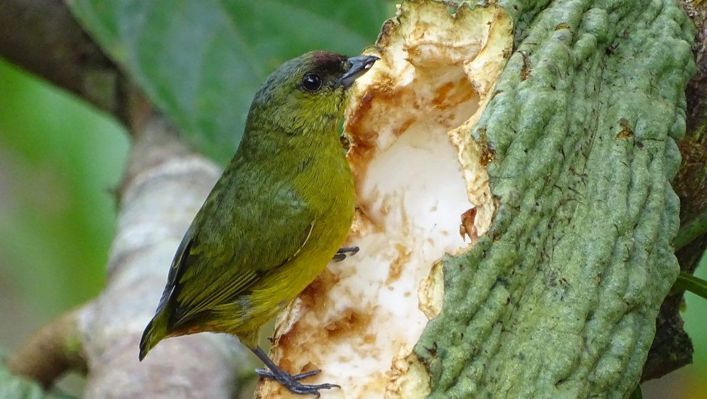 MLR Forestal identifica 250 especies de aves en sus plantaciones y crea catálogo