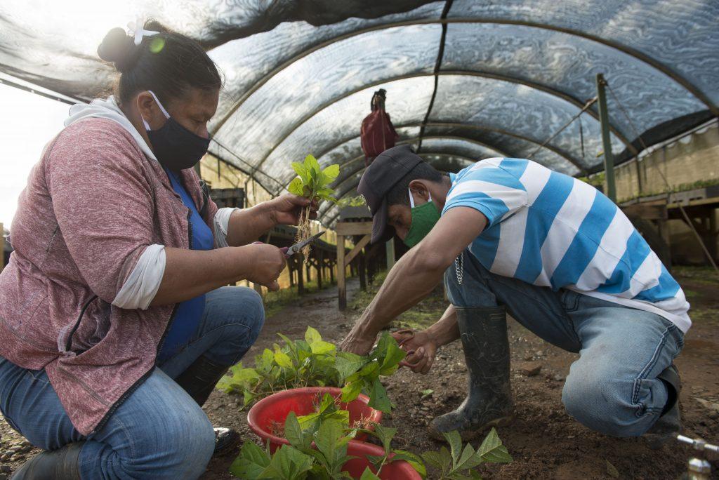 En el área de viveros de MLR Forestal al mayoría de colaboradoras son mujeres, pero también es un espacio donde se fomenta la igualdad.