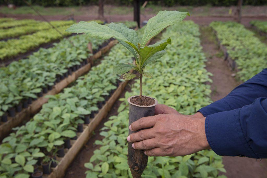 Viveros MLR Forestal