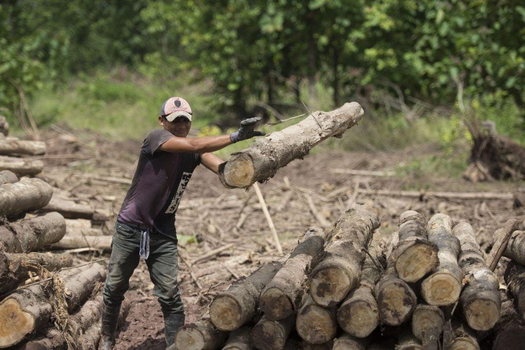 Arboles derribados MLR Forestal