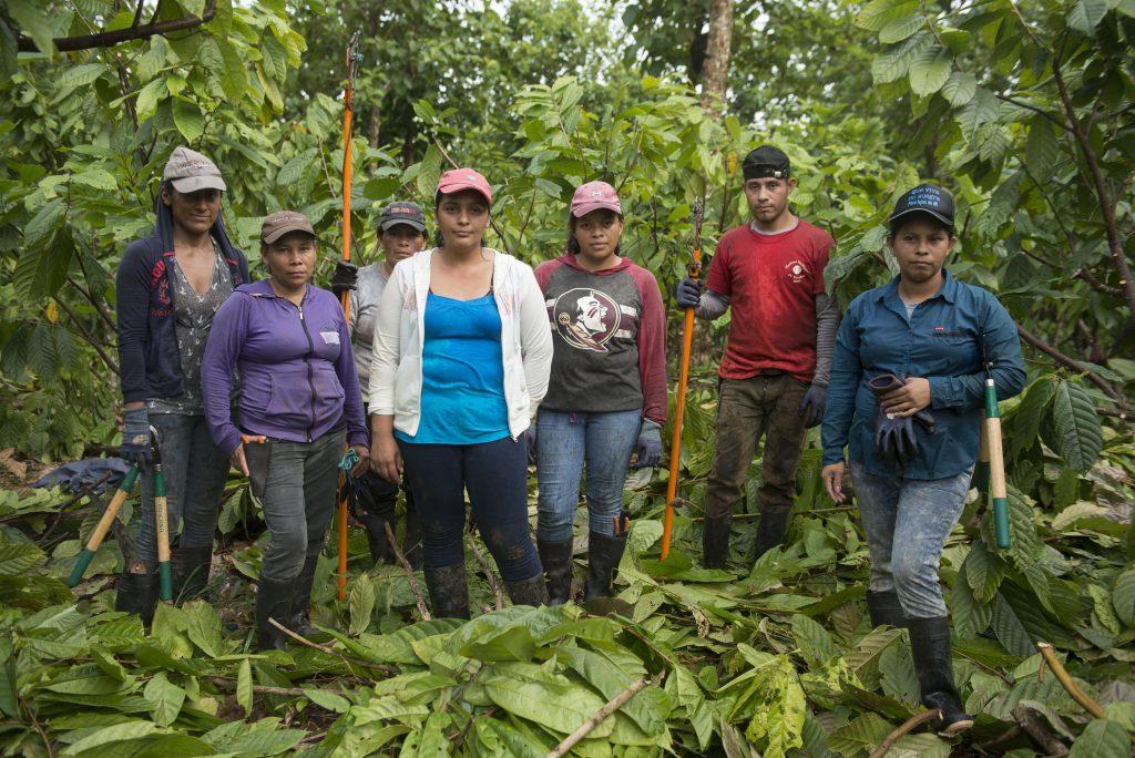 cuadrillas mixtas cacao MLR Forestal