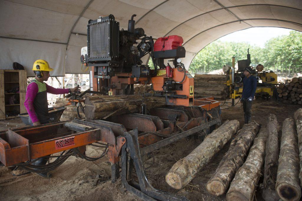 aserradero MLR Forestal