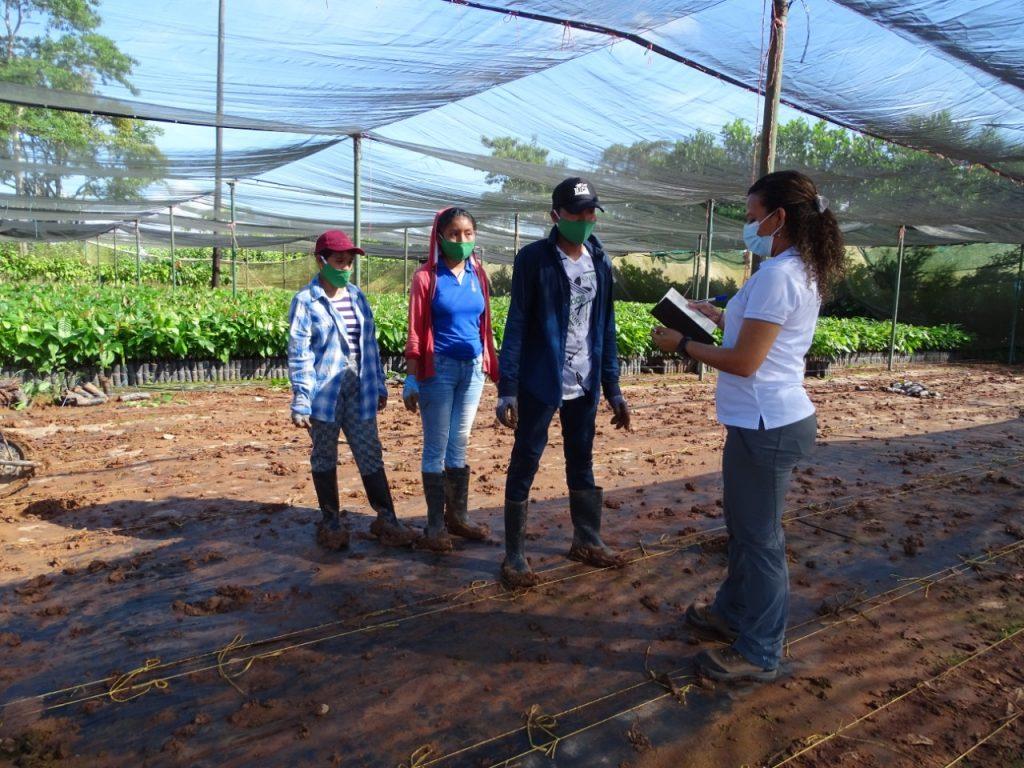 Durante la auditoría de Rainforest Alliance se realizaron entrevistas a los colaboradores de MLR Forestal.
